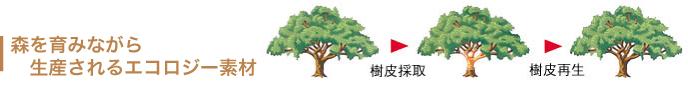 森を育みながら生産されるエコロジー素材